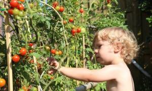 enfant-culture-jardin-permaculture-design-02